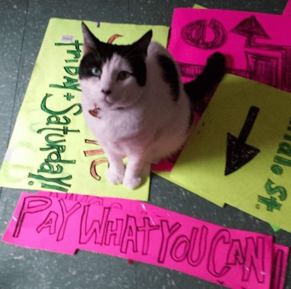 A cat with signs from Heather Macdonell's garage sale, a staple of her business, moxy. ithaca. The photo is from her Instagram, moxy_ithaca