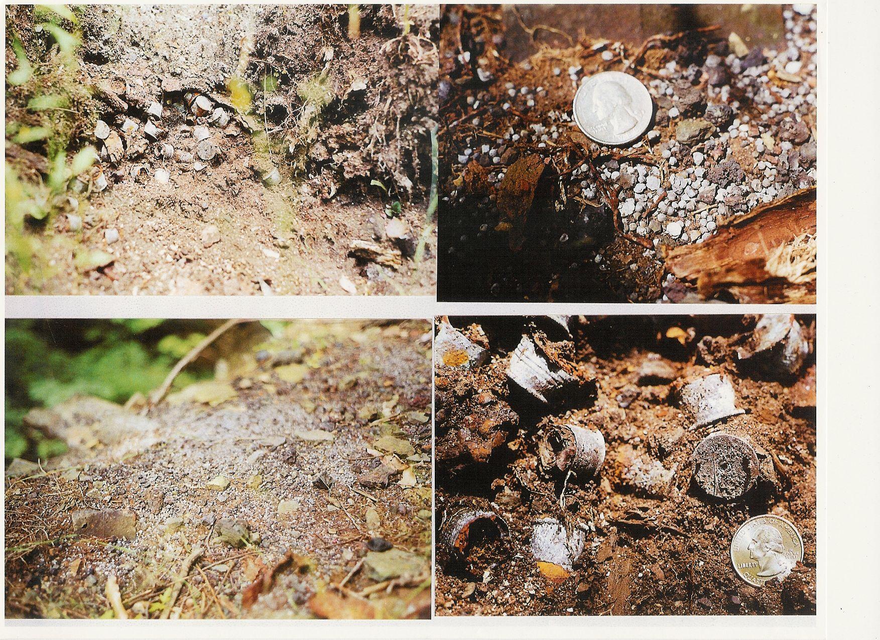 Lead Pollution and Shotgun Shell Pollution at Ithaca Falls -- Walter Hang