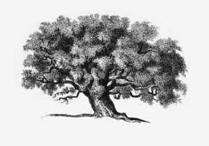 Vintage Victorian style tree engraving. Original from the British Library. Digitally enhanced by rawpixel.